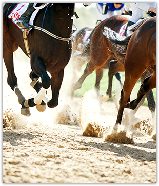 Horses Racing on Sand Track