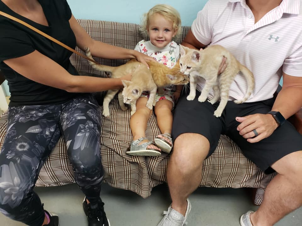 Child adopts three kittens Opens in new window